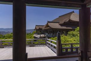 新緑の清水寺の写真素材 [FYI04887970]