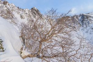 中央アルプス_サギダル尾根から宝剣岳の朝の写真素材 [FYI04887998]