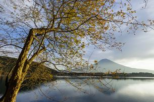 田貫湖からの朝の富士山の写真素材 [FYI04888005]
