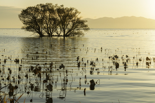 琵琶湖夕景の写真素材 [FYI04888036]