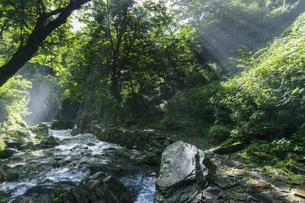 阿弥陀ヶ滝への遊歩道の写真素材 [FYI04888063]