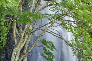 新緑と駒ヶ滝の写真素材 [FYI04888080]