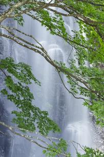 新緑と駒ヶ滝の写真素材 [FYI04888081]