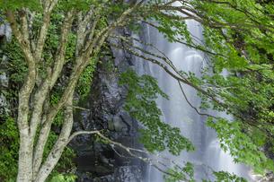 新緑と駒ヶ滝の写真素材 [FYI04888082]