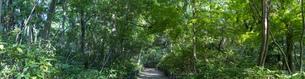 青々と茂る木々の写真素材 [FYI04888105]