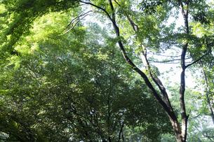 青々と茂る木々の写真素材 [FYI04888106]
