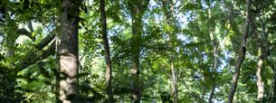 青々と茂る木々の写真素材 [FYI04888107]