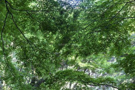 青々と茂る木々の写真素材 [FYI04888108]