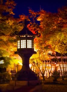 ライトアップされた永観堂禅林寺の灯篭と紅葉の写真素材 [FYI04888125]