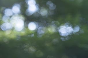 玉ボケ・丸ボケ( 森の木々)背景素材の写真素材 [FYI04888149]