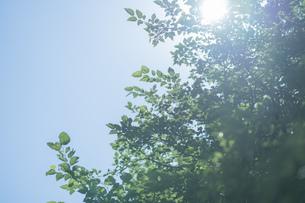 逆光で輝く木々と青空の写真素材 [FYI04888150]