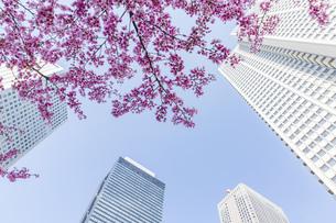 高層ビルを見上げるの写真素材 [FYI04888231]
