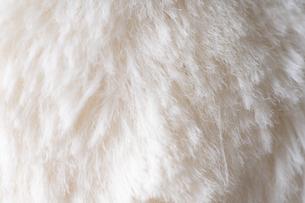 動物の毛の写真素材 [FYI04888273]