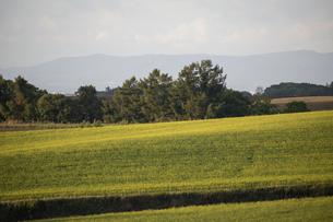 秋の畑作地帯のナノハナ畑の写真素材 [FYI04888375]