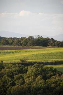 秋の畑作地帯のナノハナ畑の写真素材 [FYI04888376]
