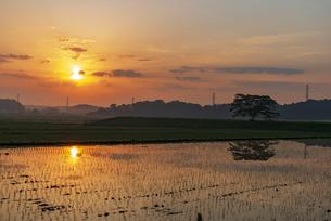 北総台地(下総台地)の朝焼けに染まる空と田植えの済んだ田んぼに朝日の写真素材 [FYI04888402]