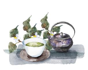 ドクダミとお茶セットの水彩画のイラスト素材 [FYI04888670]