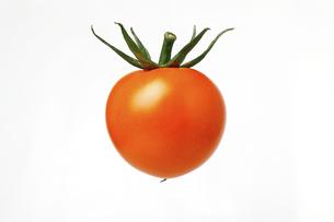 黄色のトマトの写真素材 [FYI04888794]