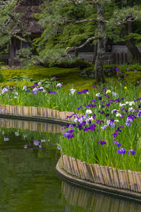 しょうざんの庭の写真素材 [FYI04888831]