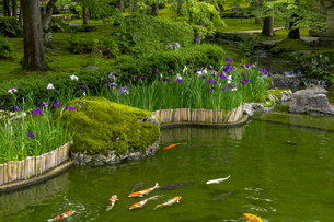 しょうざんの庭の写真素材 [FYI04888839]