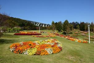 淡路島/国営明石海峡公園/青空とポプラ丘に季節の花の写真素材 [FYI04889216]