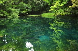 6月 遊佐町の丸池様の写真素材 [FYI04889246]