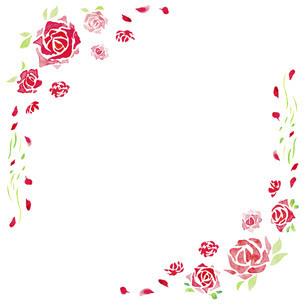 バラの水彩イラストのフレーム素材のイラスト素材 [FYI04889780]