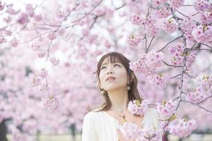 桜の花を楽しむ女性の写真素材 [FYI04889948]