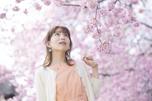 桜の花を楽しむ女性の写真素材 [FYI04889951]