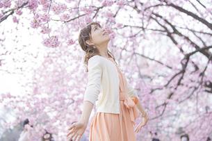 桜の花を楽しむ女性の写真素材 [FYI04889954]