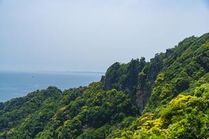 鋸山登山自動車道より鋸山房州石の岩壁広葉樹林山林の新緑東京湾を望むの写真素材 [FYI04890026]