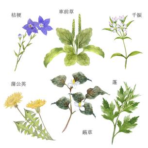 日本の薬草セット 水彩画のイラスト素材 [FYI04890068]