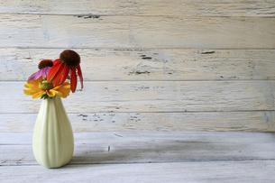 クリーム色の花瓶に活けたエキネシアとルドベキアの写真素材 [FYI04890274]