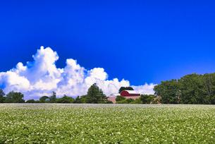 帯広郊外のジャガイモ畑と入道雲の写真素材 [FYI04890396]