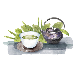 オオバコとお茶セットの水彩画のイラスト素材 [FYI04890488]