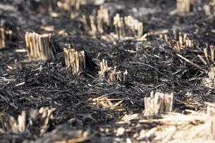 稲刈りの後の焼き畑の写真素材 [FYI04890797]