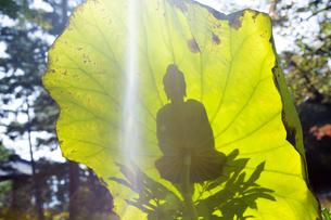 蓮の葉に映る御仏の姿の写真素材 [FYI04890806]