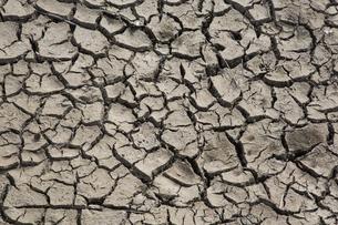 渇水した池の地割れの写真素材 [FYI04890812]