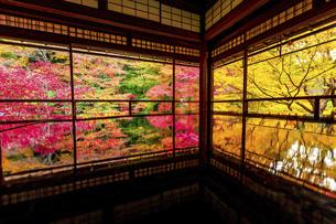 秋の瑠璃光院の写真素材 [FYI04890938]