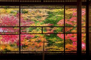 秋の瑠璃光院の写真素材 [FYI04890939]