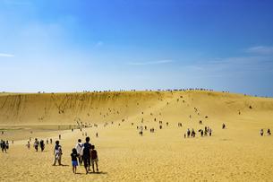 鳥取砂丘の写真素材 [FYI04890948]