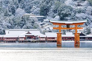 雪化粧した厳島神社の写真素材 [FYI04890951]