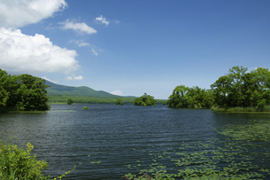 夏の大沼風景の写真素材 [FYI04891386]
