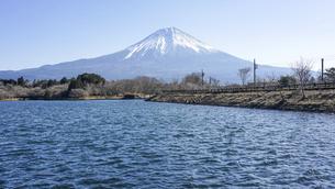 田貫湖から見渡す冬の富士山の写真素材 [FYI04891823]
