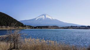 田貫湖から見渡す冬の富士山の写真素材 [FYI04891824]
