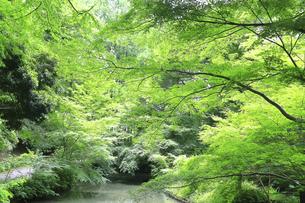 神奈川県 初夏の生田緑地の写真素材 [FYI04892338]