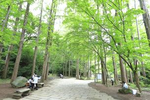 神奈川県 初夏の生田緑地の写真素材 [FYI04892373]
