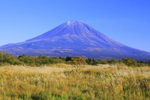 ススキの色づく朝霧高原と富士山の写真素材 [FYI04892571]