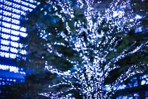 街路樹のクリスマスイルミネーションの写真素材 [FYI04893197]