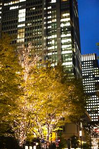 街路樹のクリスマスイルミネーションの写真素材 [FYI04893212]